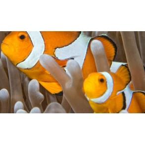 Fisk Sundhed
